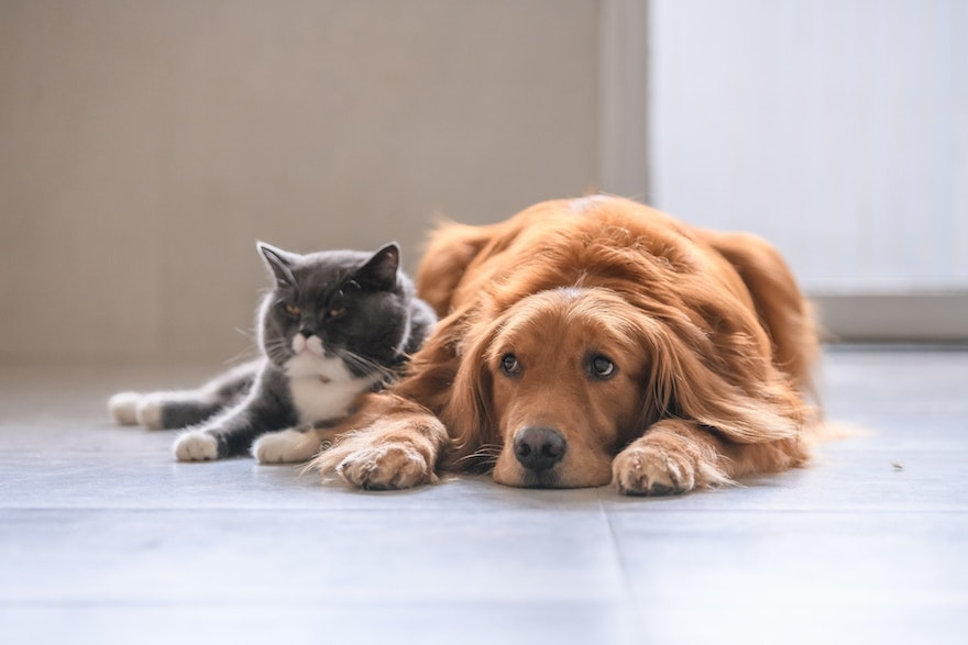 Renting with pets: 9 tips to have a stress-free move to your new rental