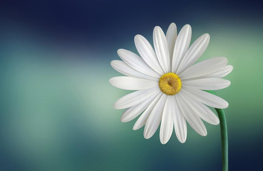 Florecer: Una nueva manera de comprender la felicidad y el bienestar