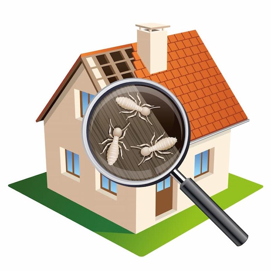 Termites maison : repérage, diagnostic et vente