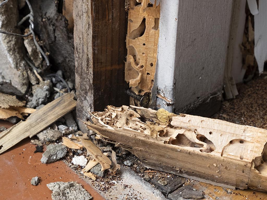 dommages termites2.jpg