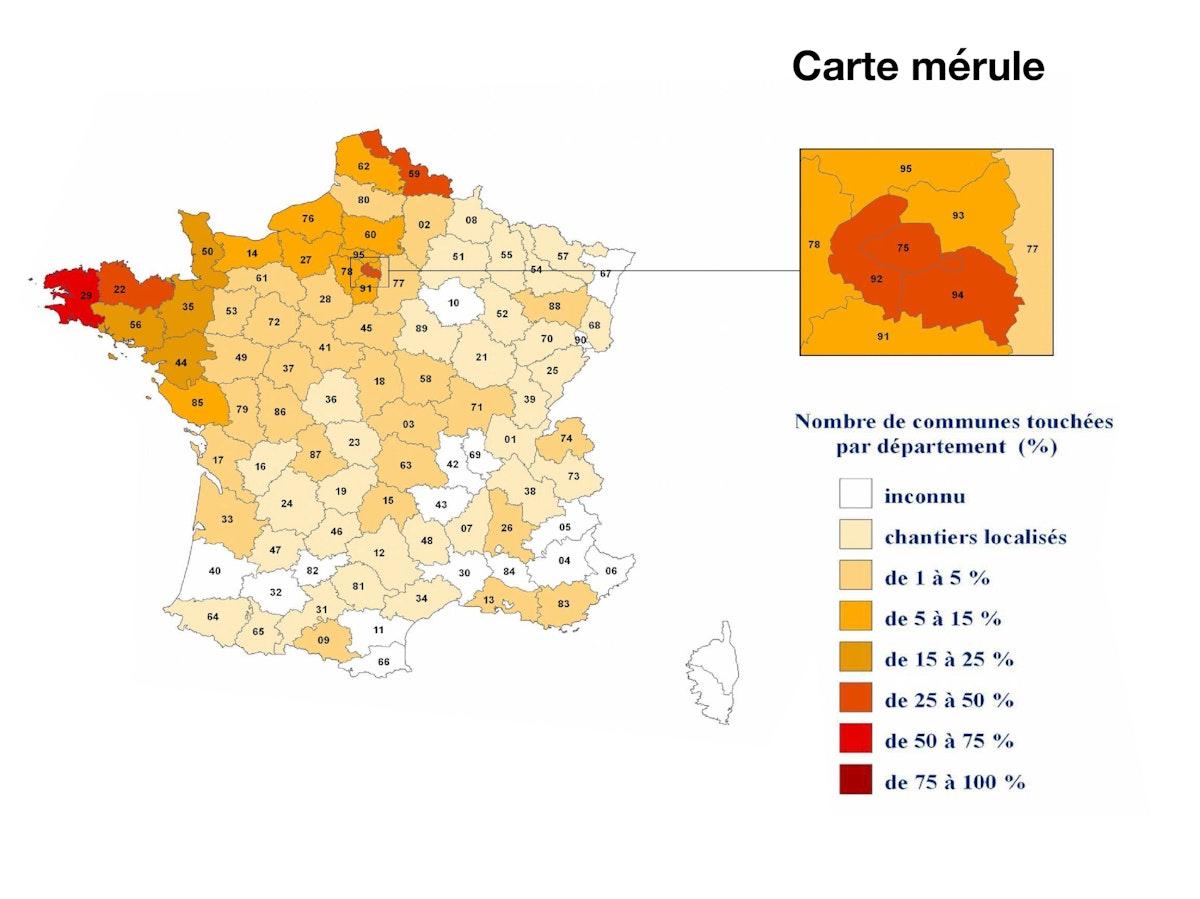 carte-mérule-zone-diagnostic-département-ville.jpg